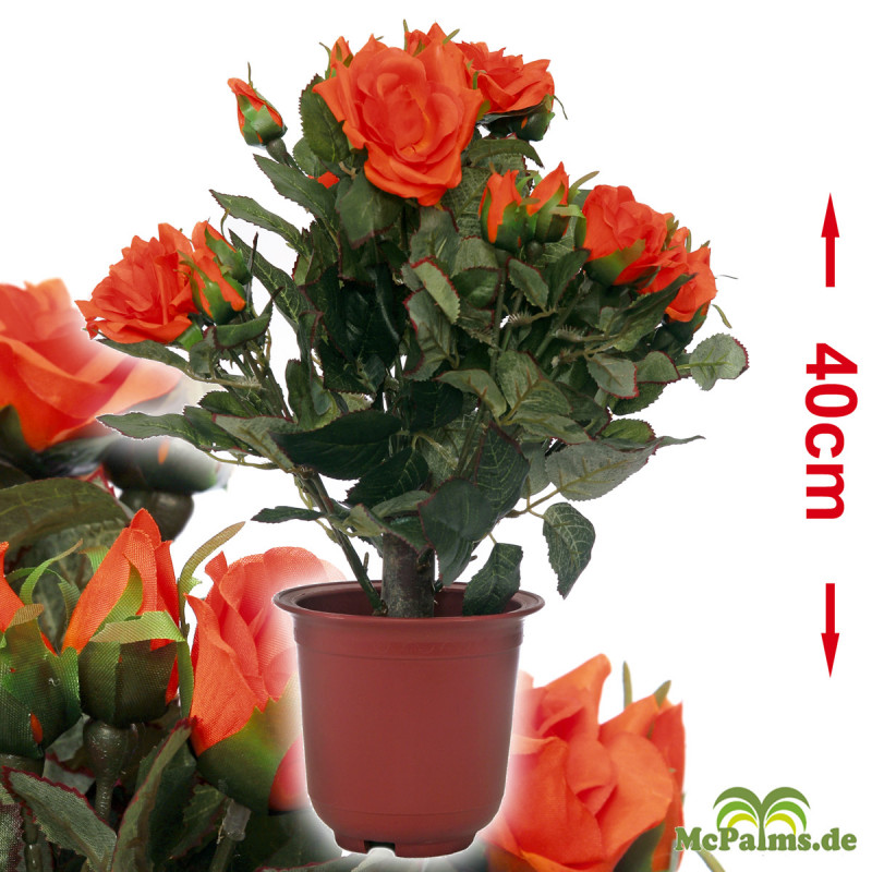 Rosenpflanze 40 cm orange