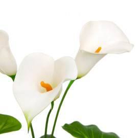 Calla Lily weiss 45 cm