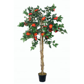 Camellia Japonica 1,40 m rot
