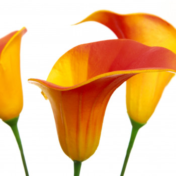 Calla Liliy gelb/orange 65 cm